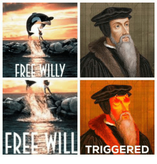 Freeing Willy