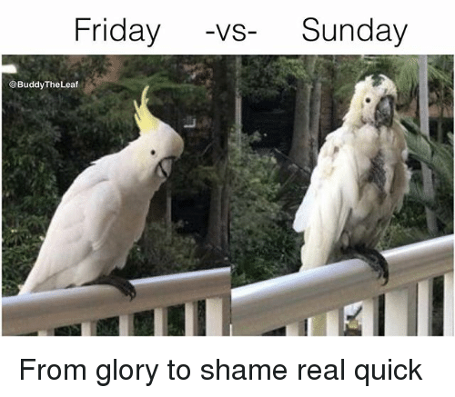 Friday, Memes, and Sunday: Friday -vs Sunday  @Buddy TheLeaf From glory to shame real quick
