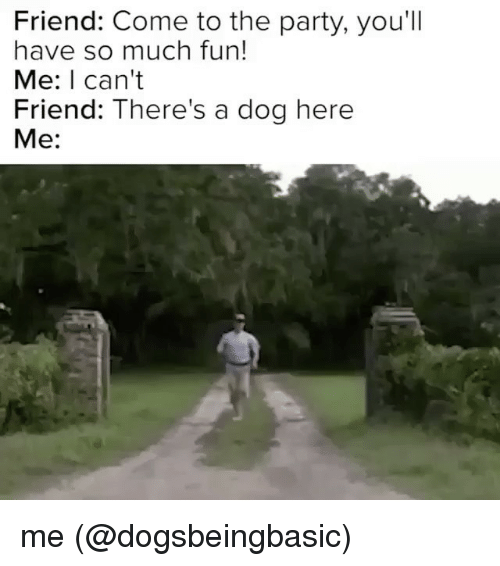 Memes, 🤖, and Dog: Friend: Come to the party, you'll  have so much fun!  Me: I can't  Friend: There's a dog here  Me me (@dogsbeingbasic)