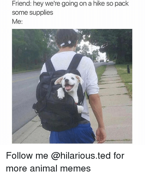 Funny, Memes, and Ted: Friend: hey we're going on a hike so pack  some supplies  Me: Follow me @hilarious.ted for more animal memes