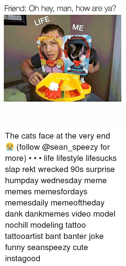 Cats, Cute, and Dank: Friend: Oh hey, man, how are ya?  ME The cats face at the very end 😭 (follow @sean_speezy for more) • • • life lifestyle lifesucks slap rekt wrecked 90s surprise humpday wednesday meme memes memesfordays memesdaily memeoftheday dank dankmemes video model nochill modeling tattoo tattooartist bant banter joke funny seanspeezy cute instagood