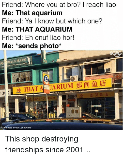Memes, Aquarium, and Showtime: Friend: Where you at bro? reach liao  Me: That aquarium  Friend: Ya I know but which one?  Me: THAT AQUARIUM  Friend: Eh enuf liao hor!  Me  sends photo  NMA  ESCULPTURE GALLERY  THAT AQU RUM  MOTOR  Submitted by itis showtime This shop destroying friendships since 2001...