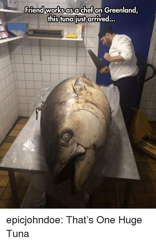 Tumblr, Blog, and Chef: Friend works as a chef on Greenland  this tuna liust arrived... epicjohndoe:  That's One Huge Tuna
