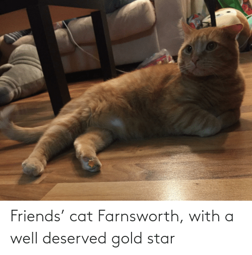Friends, Star, and Cat: Friends' cat Farnsworth, with a well deserved gold star