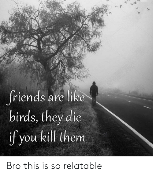 Friends, Birds, and Relatable: friends are like  birds, they die  if you kill them Bro this is so relatable
