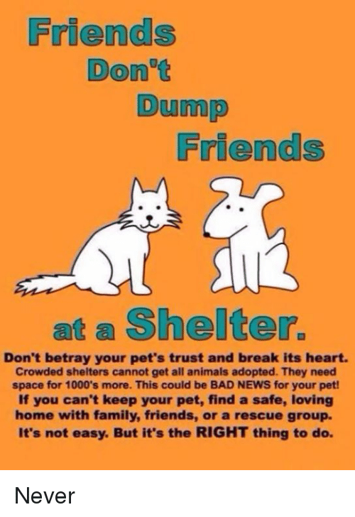 Memes, 🤖, and Betrayal: Friends Don't Dump Friends at a Shelter