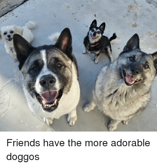 Friends, Adorable, and Been: Friends have the more adorable doggos