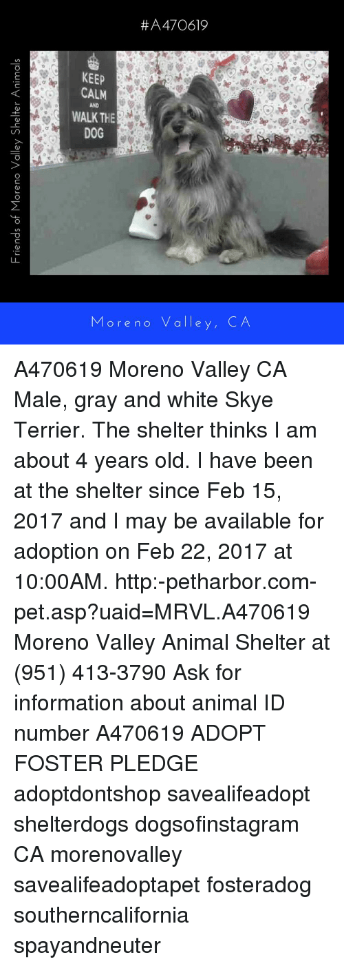 Memes, Information, and 🤖: Friends of More no Valley Shelter Animals ore no