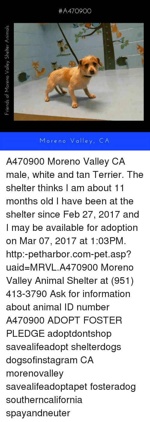 Memes, 🤖, and Asp: Friends of Moreno Valley Shelter Animals ore no valle
