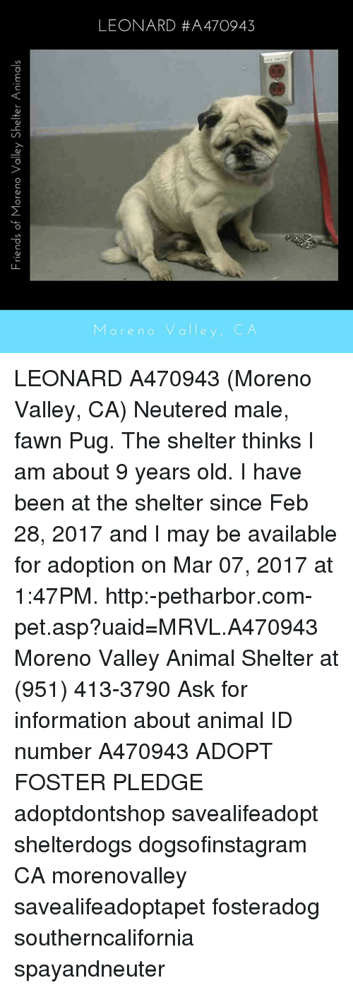 Memes, 2017, and Pugs: Friends of Moreno Valley Shelter Animals ore no valle