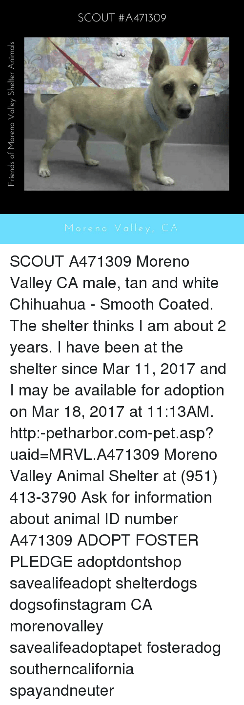 Chihuahua, Memes, and 🤖: Friends of Moreno Valley Shelter Animals ore no valle