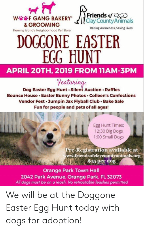 Club, Dogs, and Easter: Friends of  wGANG BAKERYCay CountyAnimals  & GROOMING  Fleming island's Neighborhood Pet Store  Raising Awareness, Saving Lives  DOGGONE EASTER  EGG HUNT  APRIL 2OTH, 2019 FROM 11AM-3PM  eaturing  Dog Easter Egg Hunt.Silent Auction. Raffles  Bounce House Easter Bunny Photos Colleen's Confections  Vendor Fest.Jumpin Jax Flyball Club Bake Sale  Fun for people and pets of all ages!  Egg Hunt Times:  12:30 Big Dogs  1:00 Small Dogs  Registration available at  endsofelaycountyanimals.org  e-  15 per dog  Orange Park Town Hall  2042 Park Avenue, Orange Park, FL 32073  All dogs must be on a leash. No retractable leashes permitted We will be at the Doggone Easter Egg Hunt today with dogs for adoption!