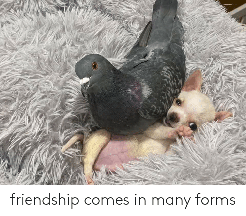 Friendship, Many, and Comes: friendship comes in many forms