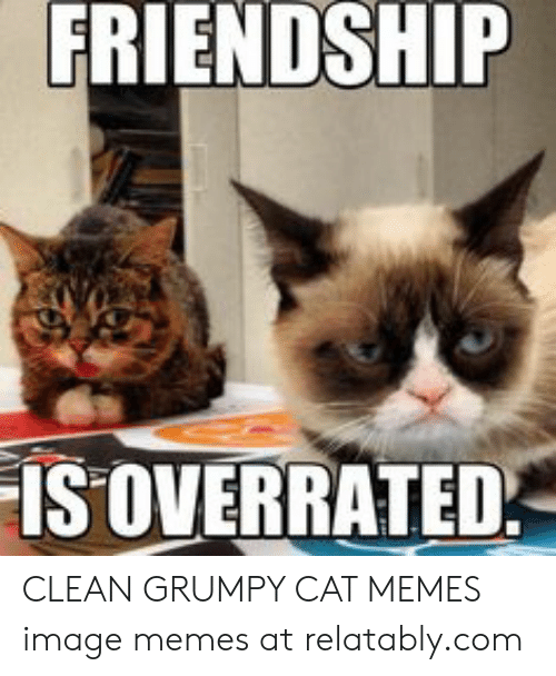 Friendship Istoverrated Clean Grumpy Cat Memes Image Memes