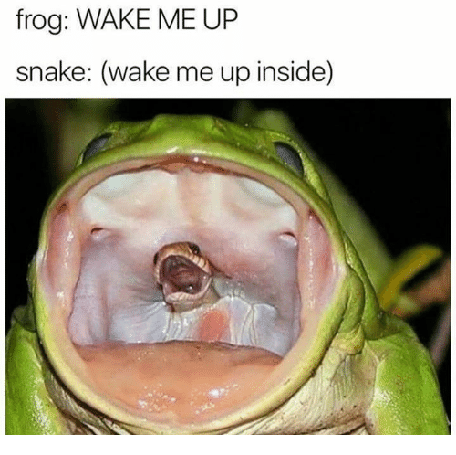 Snake, Frog, and Wake: frog: WAKE ME UP  snake: (wake me up inside)