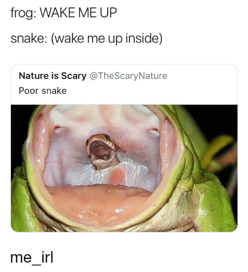 Frog WAKE ME UP Snake Wake Me Up Inside Nature Is Scary ...