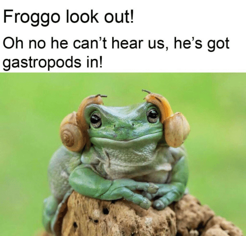 Got, Look, and Oh No: Froggo look out!  Oh no he can't hear us, he's got  gastropods in!