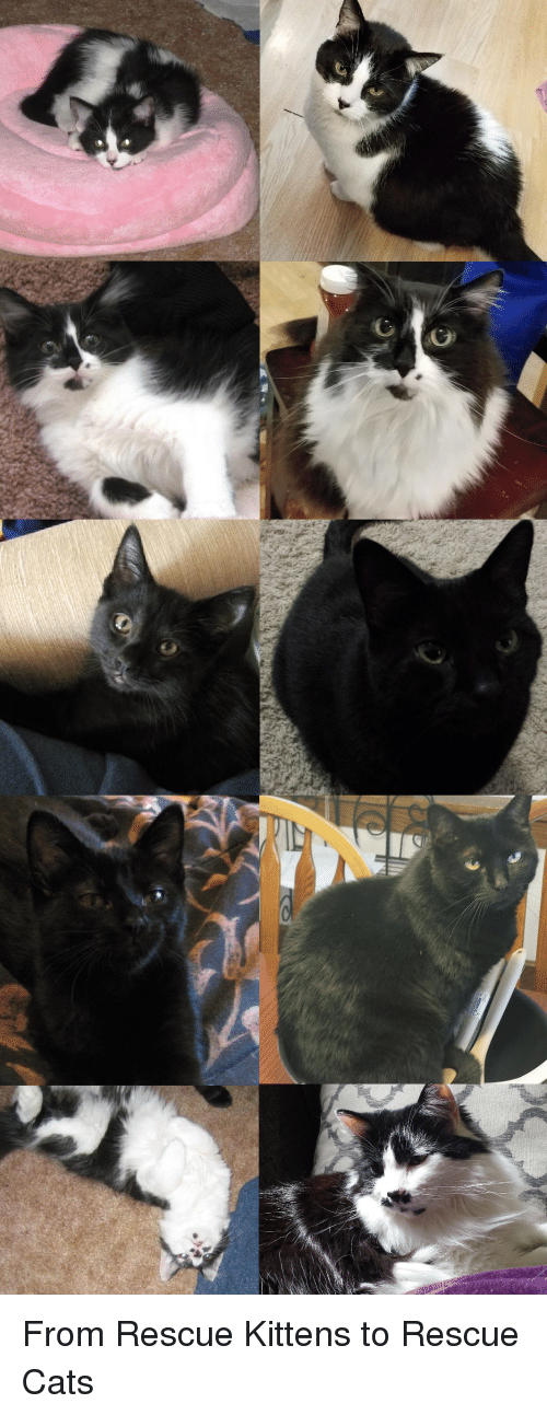 Cats, Kittens, and From: From Rescue Kittens to Rescue Cats