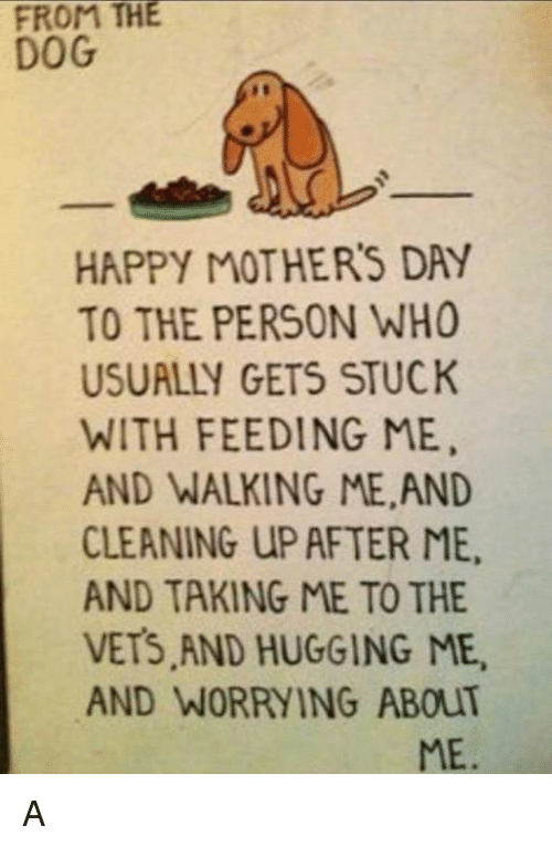Memes, Mother's Day, and Happy: FROM THE  DOG  HAPPY MOTHERS DAY  TO THE PERSON WHO  USUALLY GETS STUCK  WITH FEEDING ME,  AND WALKING ME AND  CLEANING UP AFTER ME.  AND TAKING ME TO THE  VETS AND HUGGING ME,  AND WORRYING ABOUT  ME. A