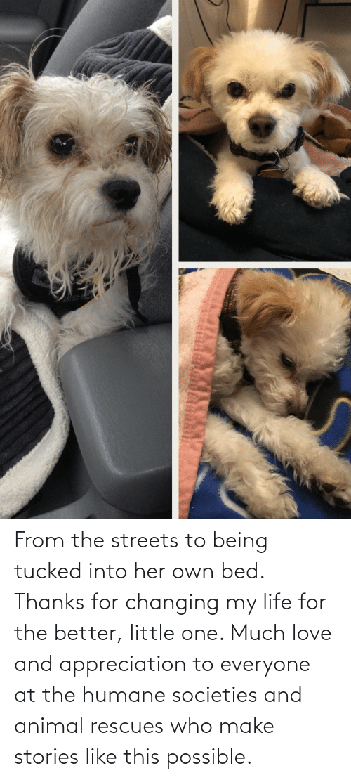 Life, Love, and Streets: From the streets to being tucked into her own bed. Thanks for changing my life for the better, little one. Much love and appreciation to everyone at the humane societies and animal rescues who make stories like this possible.