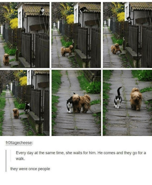 Time, Humans of Tumblr, and Once: frOttagecheese:  Every day at the same time, she waits for him. He comes and they go for a  walk.  they were once people