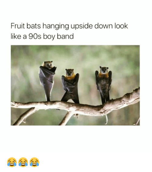 fruit bats hanging upside down look like a 90s boy band