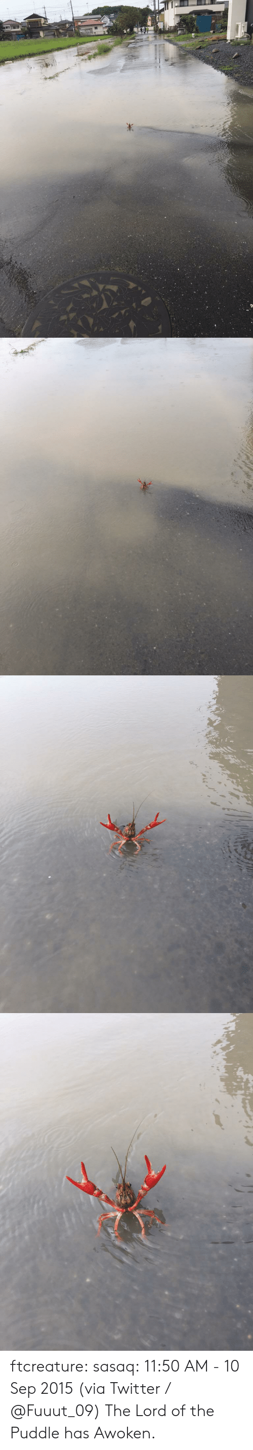 Target, Tumblr, and Twitter: ftcreature:  sasaq:  11:50 AM - 10 Sep 2015 (via Twitter / ふ み な @Fuuut_09)    The Lord of the Puddle has Awoken.