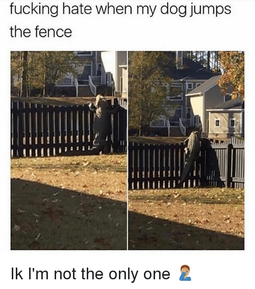 Fucking, Memes, and Only One: fucking hate when my dog jumps  the fence  C. Ik I'm not the only one 🤦🏽‍♂️
