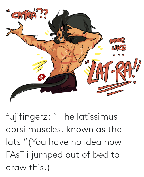 """SoundCloud, True, and Tumblr: fujifingerz:    """"The latissimus dorsi muscles, known as the lats  """"(You have no idea how FAsT i jumped out of bed to draw this.)"""