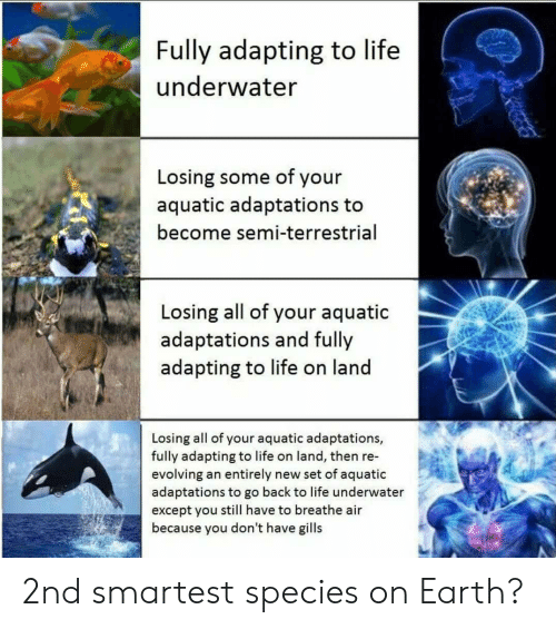 Life, Earth, and Back: Fully adapting to life  underwater  Losing some of your  aquatic adaptations to  become semi-terrestrial  Losing all of your aquatic  adaptations and fully  adapting to life on land  Losing all of your aquatic adaptations,  fully adapting to life on land, then re-  evolving an entirely new set of aquatic  adaptations to go back to life underwater  except you still have to breathe air  because you don't have gills 2nd smartest species on Earth?