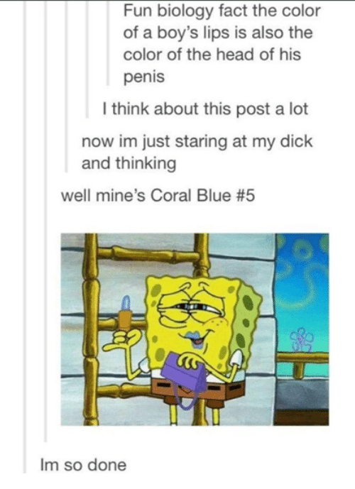 Head, Blue, and Dick: Fun biology fact the color  of a boy's lips is also the  color of the head of his  penis  l think about this post a lot  now im just staring at my dick  and thinking  well mine's Coral Blue #5  Im so done
