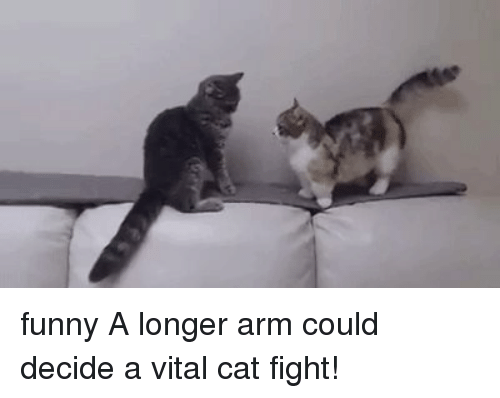 A Longer Arm Could Decide And Vital Cat Fight