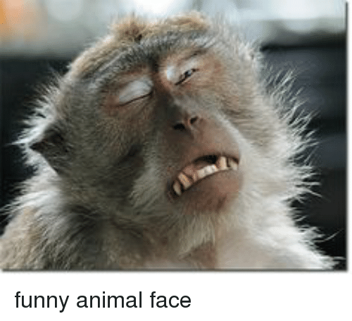 Image of: Jokes Funny Funny Animals And Funny Animal Funny Animal Face Funny Funny Animal Face Funny Meme On Meme