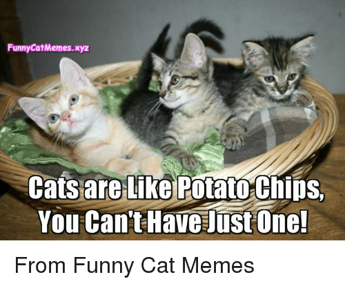 Funny Kid Friendly Cat Memes : Funny catmemesxyz cats are like potatothips you can t have just