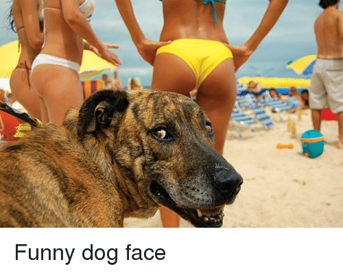 Funny dog face funny meme on me funny dog face and funny dog funny dog face voltagebd Image collections