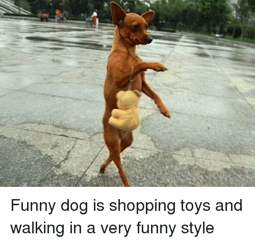 Image of: Dog Dogs Funny And Shopping Funny Dog Is Shopping Toys And Walking In Funny Funny Dog Is Shopping Toys And Walking In Very Funny Style Dogs