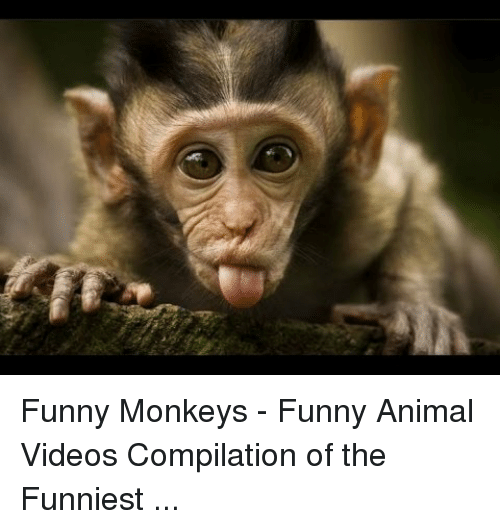 Image of: Clips Animals Anime And Funny Funny Monkeys Funny Animal Videos Compilation Of The Viralherd Funny Monkeys Funny Animal Videos Compilation Of The Funniest