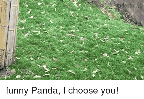 25 best memes about funny pandas funny pandas memes memes panda and funny panda i choose you voltagebd Image collections
