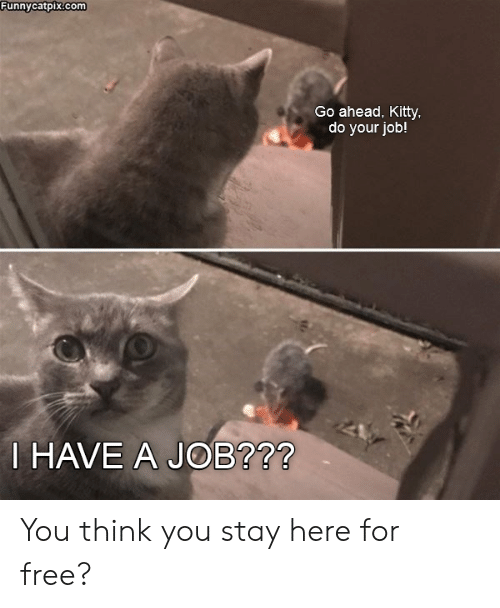 Funnycatpixcom Go Ahead Kitty Do Your Job! HAVE a JOB?72 You Think