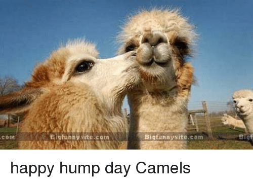 funnysite con big funny site com happy hump day camels 7449896 25 best hump day camel memes that memes, mouthful memes, humps memes