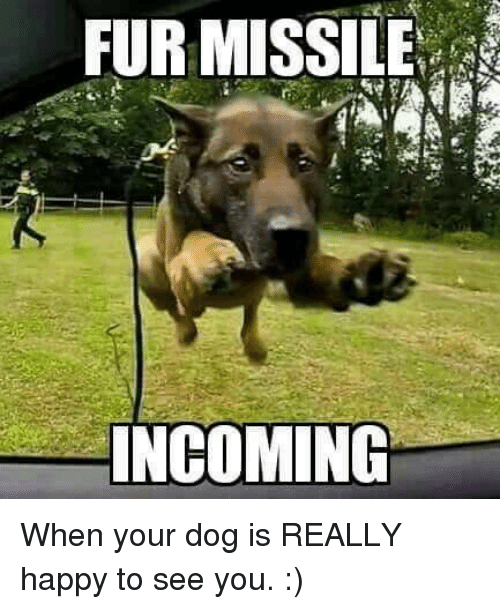 fur missile incoming when your dog is really happy to 5223746 fur missile incoming when your dog is really happy to see you