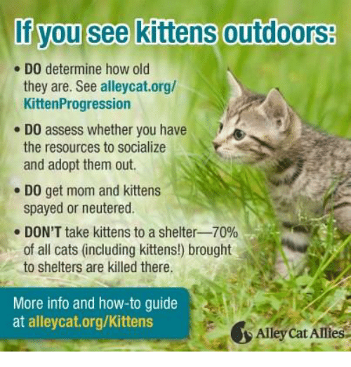 How do you care for cats
