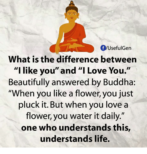 what is the difference between love and like