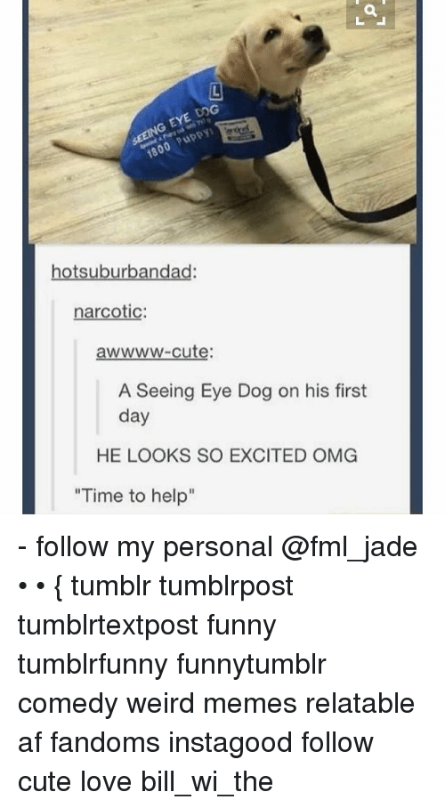"""Af, Cute, and Dogs: G EYE DOG  otsuburbandad  narcotic  awwww-cute:  A Seeing Eye Dog on his first  day  HE LOOKS SO EXCITED OMG  """"Time to help"""" - follow my personal @fml_jade • • { tumblr tumblrpost tumblrtextpost funny tumblrfunny funnytumblr comedy weird memes relatable af fandoms instagood follow cute love bill_wi_the"""