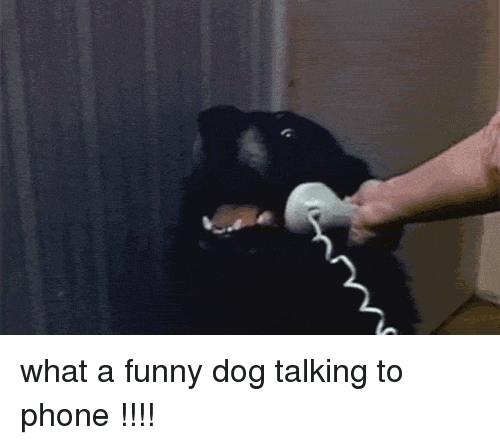 Hello This Is Dog Meme
