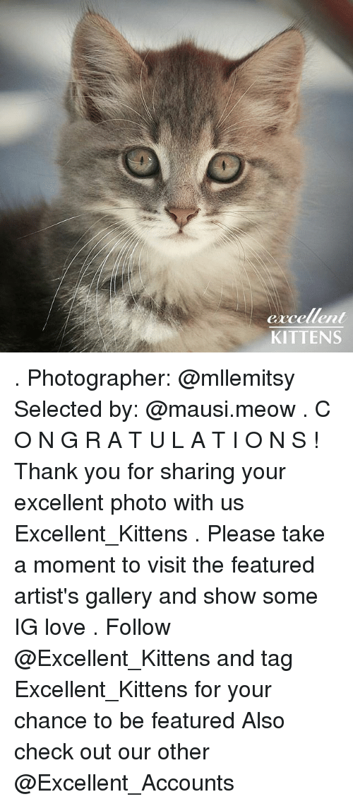 Love, Memes, and Thank You: G1  excellent  KITTENS . Photographer: @mllemitsy Selected by: @mausi.meow . C O N G R A T U L A T I O N S ! Thank you for sharing your excellent photo with us Excellent_Kittens . Please take a moment to visit the featured artist's gallery and show some IG love . Follow @Excellent_Kittens and tag Excellent_Kittens for your chance to be featured Also check out our other @Excellent_Accounts