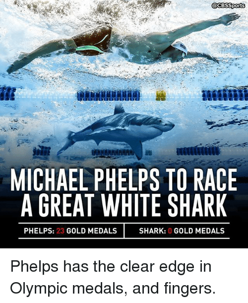 MICHAEL PHELPS TO RACE  A GREAT WHITE SHARK  PHELPS: 23  GOLD MEDALS  SHARK: 0 GOLD MEDALS Phelps has the clear edge in Olympic medals, and fingers.