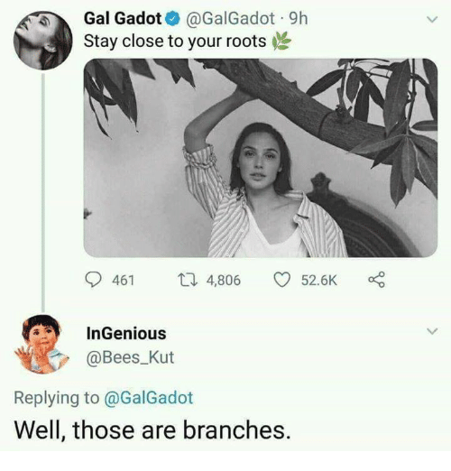 Memes, Bees, and Gal Gadot: Gal Gadot@GalGadot 9h  Stay close to your roots  461 4,806 52.6K  InGenious  @Bees Kut  Replying to @GalGadot  Well, those are branches.