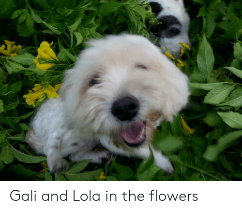 Flowers, Lola, and And: Gali and Lola in the flowers