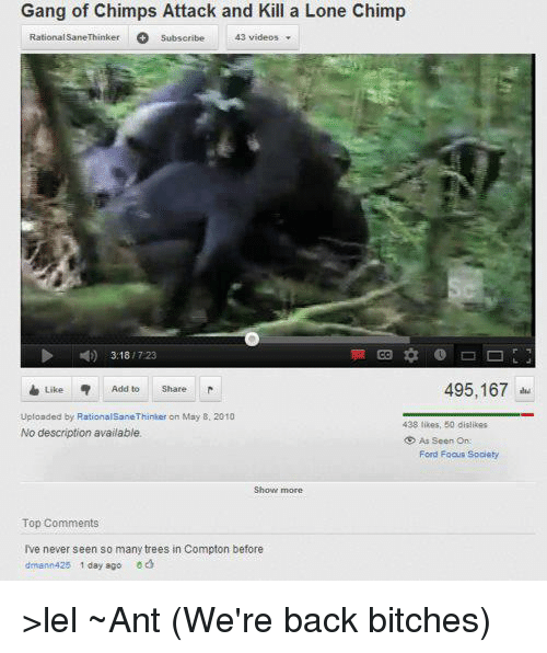 Gang of Chimps Attack and Kill a Lone Chimp Rational